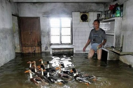 67 Ducks Dont Make Good House Pets
