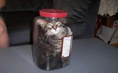 77 Jarred Cat