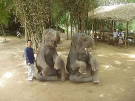 77 Meet My Two Friends The Elephants