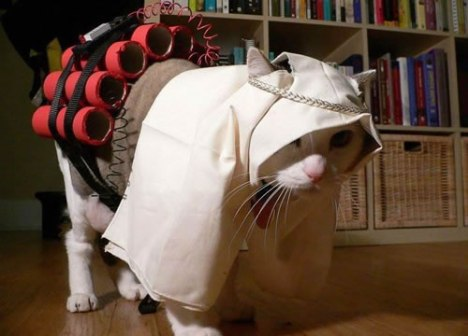 89 Suicide Bomber Cat