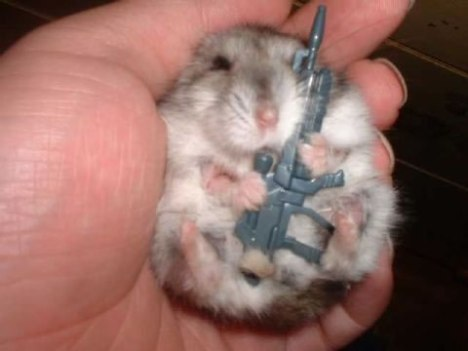 47 Armed Gerbil