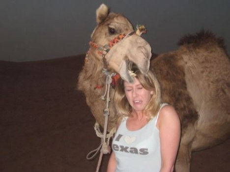 66 Carnivorous Camel