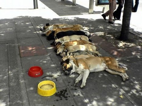 67 Dog Mass Suicide