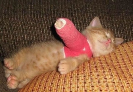 68 Cat in a Cast