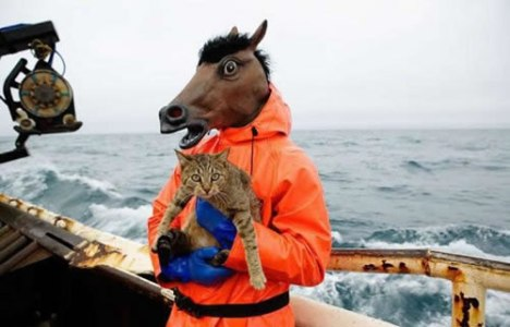 69 Horse Holding A Cat