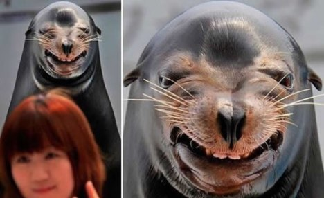 69 Seal Happy