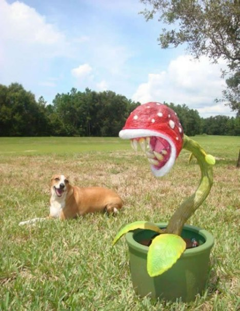 74 Keep Your Piranha Plant Away from Pets