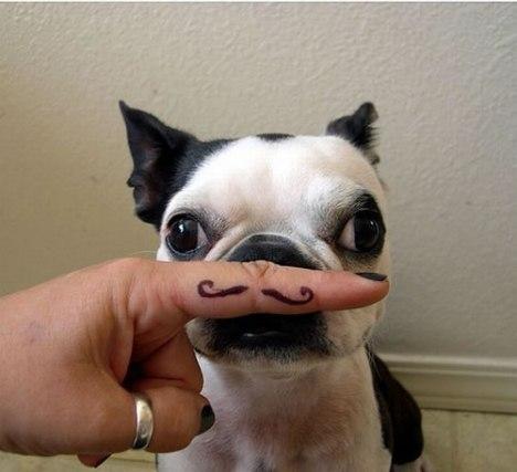 77 Mustachio