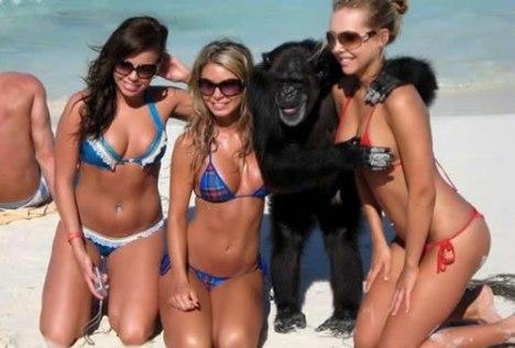 78 Monkey Business