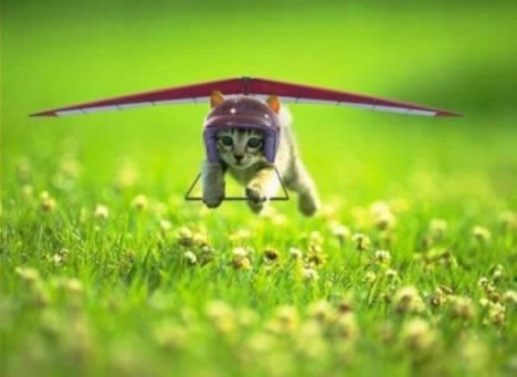 83 Kitty Gliding