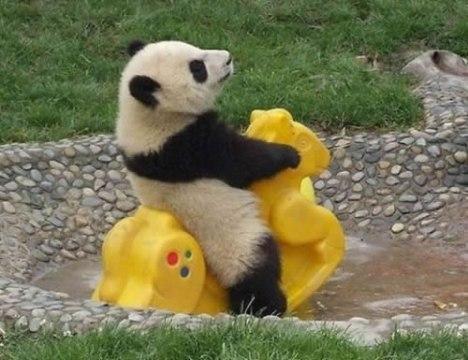 85 Panda Play Time