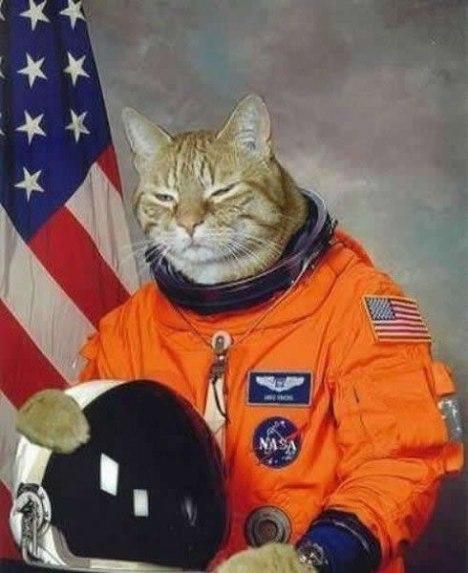 65 NASA Cat