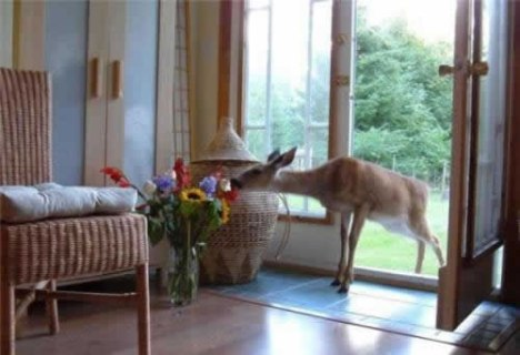 66 Deer Intruder