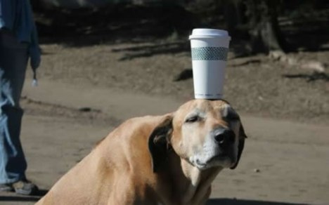 67 He Will Do Anything for Coffee