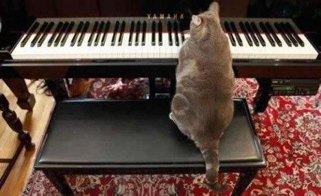 73 Ill Show that Goddamn Keyboard Cat