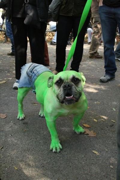 74 Hulk Dog