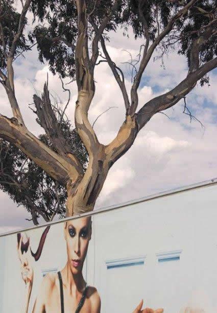 89 Tree Head Mural