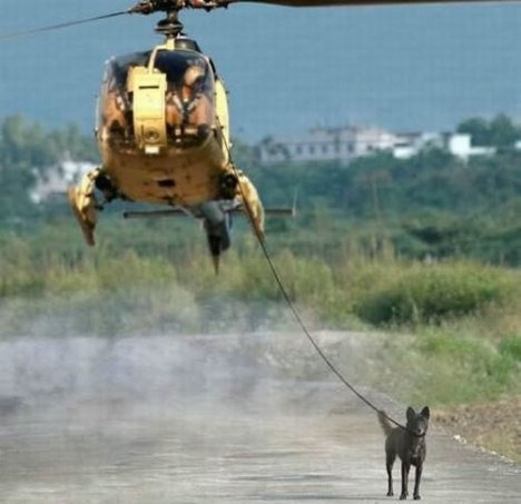 95 Walking a Dog with a Helicopter